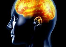 Homoseksualizm mamy w mózgu