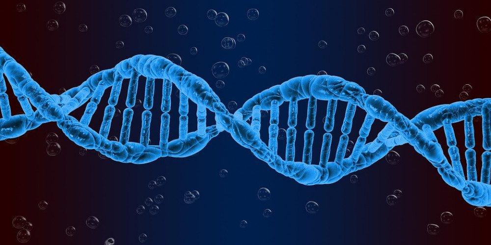 Badania wykazują powiązanie pomiędzy genami a orientacją seksualną