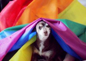 Naukowcy i naukowczynie wyróżniają ponad 1500 homoseksualnych gatunków zwierząt